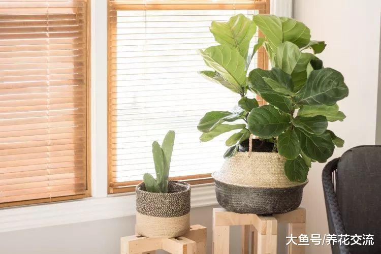 养花新手如何选择适合自己的盆栽植物, 有哪些