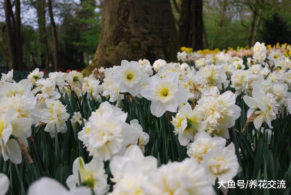 七种在阴凉处就能保持不断开花的植物, 在光线明亮处也能开花