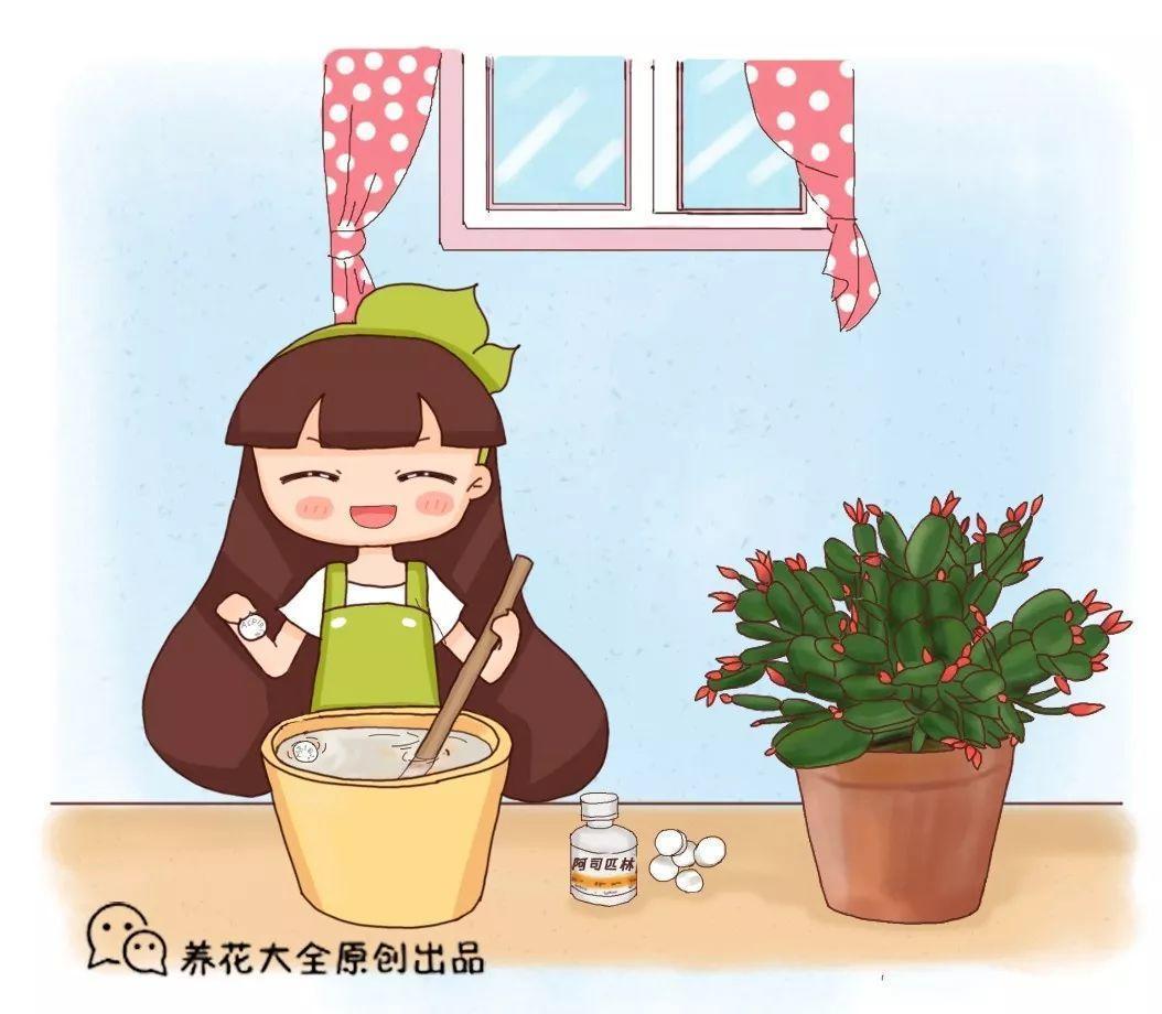 """家家都有的""""小药片"""", 碾碎兑水来浇花, 嗖嗖长个不黄叶!"""