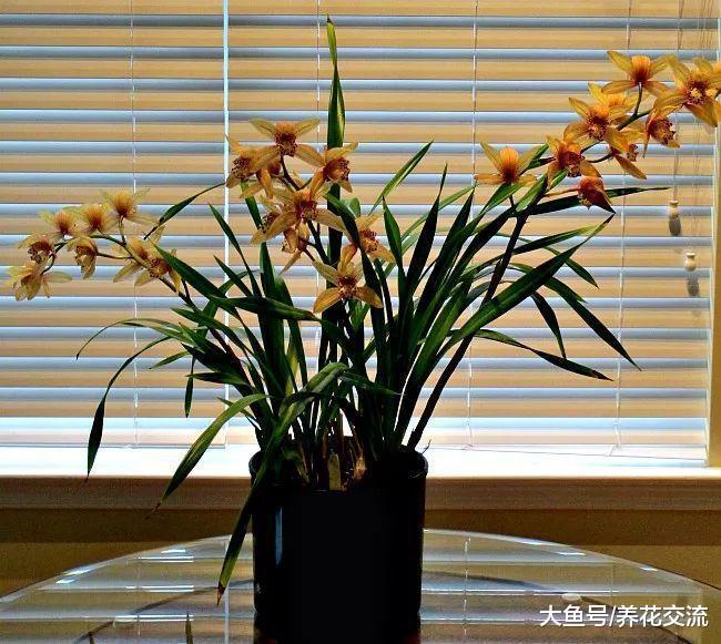 冬季室内养护的盆栽兰花是否需要施肥? 施肥有什么注意事项呢?