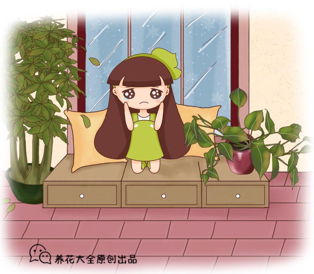 搬屋里就能活? 绿萝放错位置, 叶子发蔫不停掉!