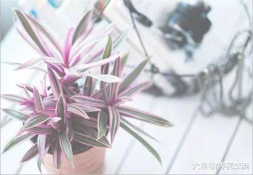 这些植物养在家里都是没有毒性, 家里有儿童和
