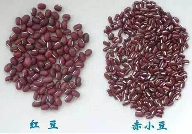 女人喝红豆薏米水减肥, 体重却一直下不去? 原因可能是这3个!