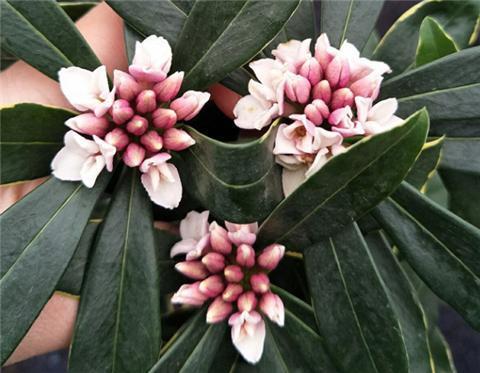 """冬天养这3种""""耐冻花"""", 0℃还在""""开花"""", 过年红火、喜庆"""