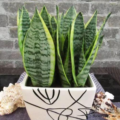 单调的房子, 少不了有趣的植物, 放几株植物总能让你的房子不一样!