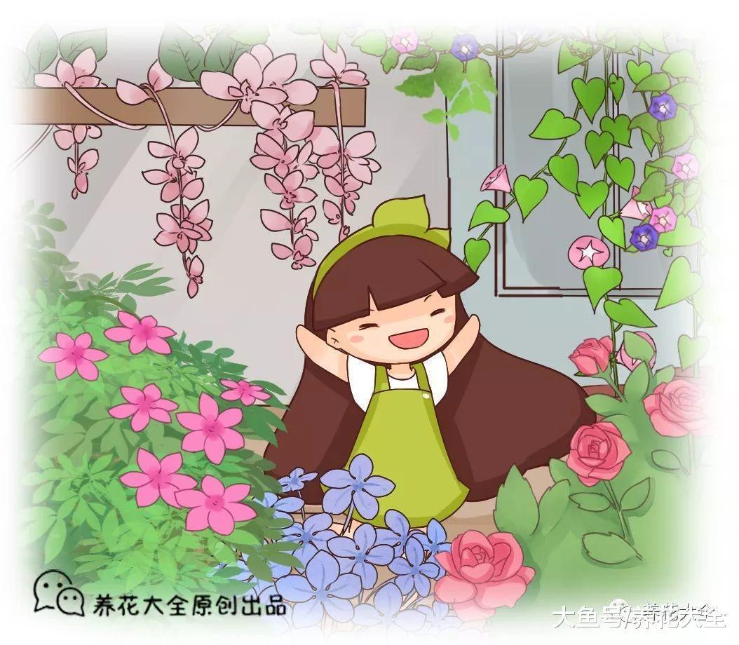 这20种花, 好看又好养, 是养花新手们的最爱!