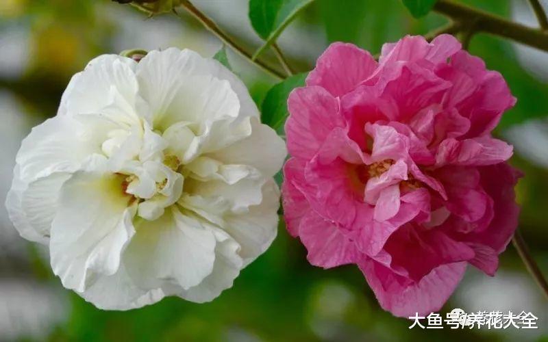 养花就选6种, 不但花美好养, 还能一天一变样!
