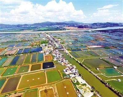 金湾人口_珠海这条村要火了 竟藏着这么梦幻的仙境