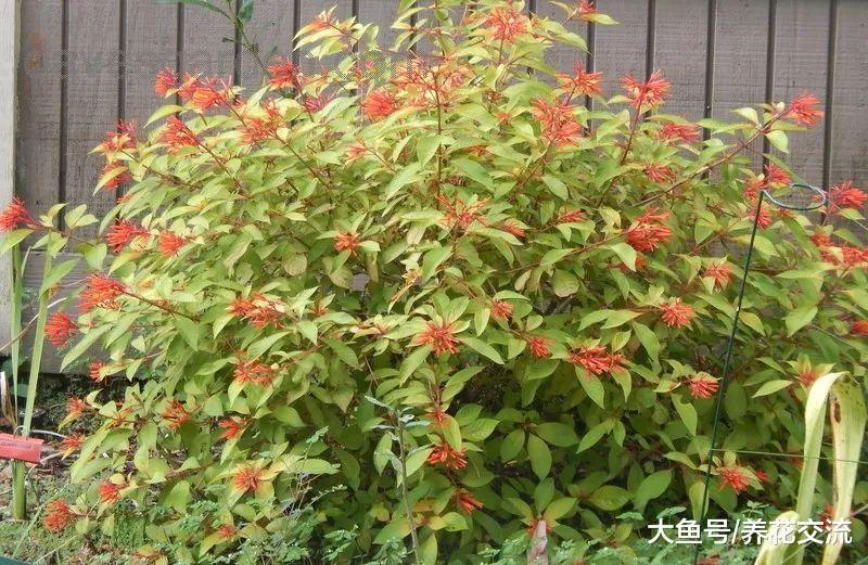 几种开花特别迷人的植物, 特别适合养在院子里