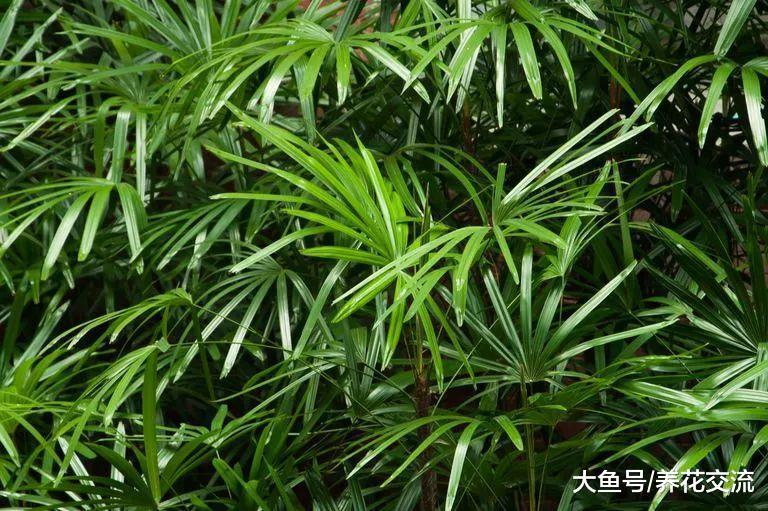 净化空气非常有效的7种植物, 每家都值得养几盆?