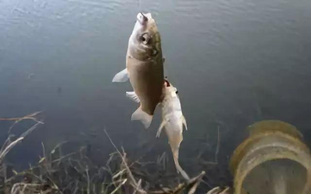 冬季火库和鱼塘垂纶要看位置知鱼性测火温