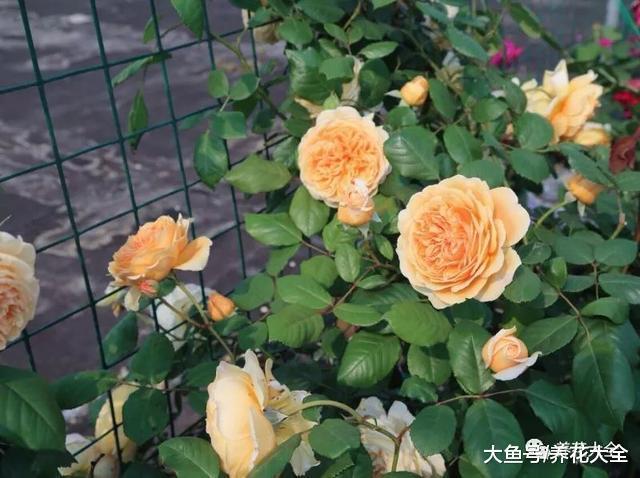 天越来越热, 别忘了给花用点这个, 叶子变得又绿又亮!