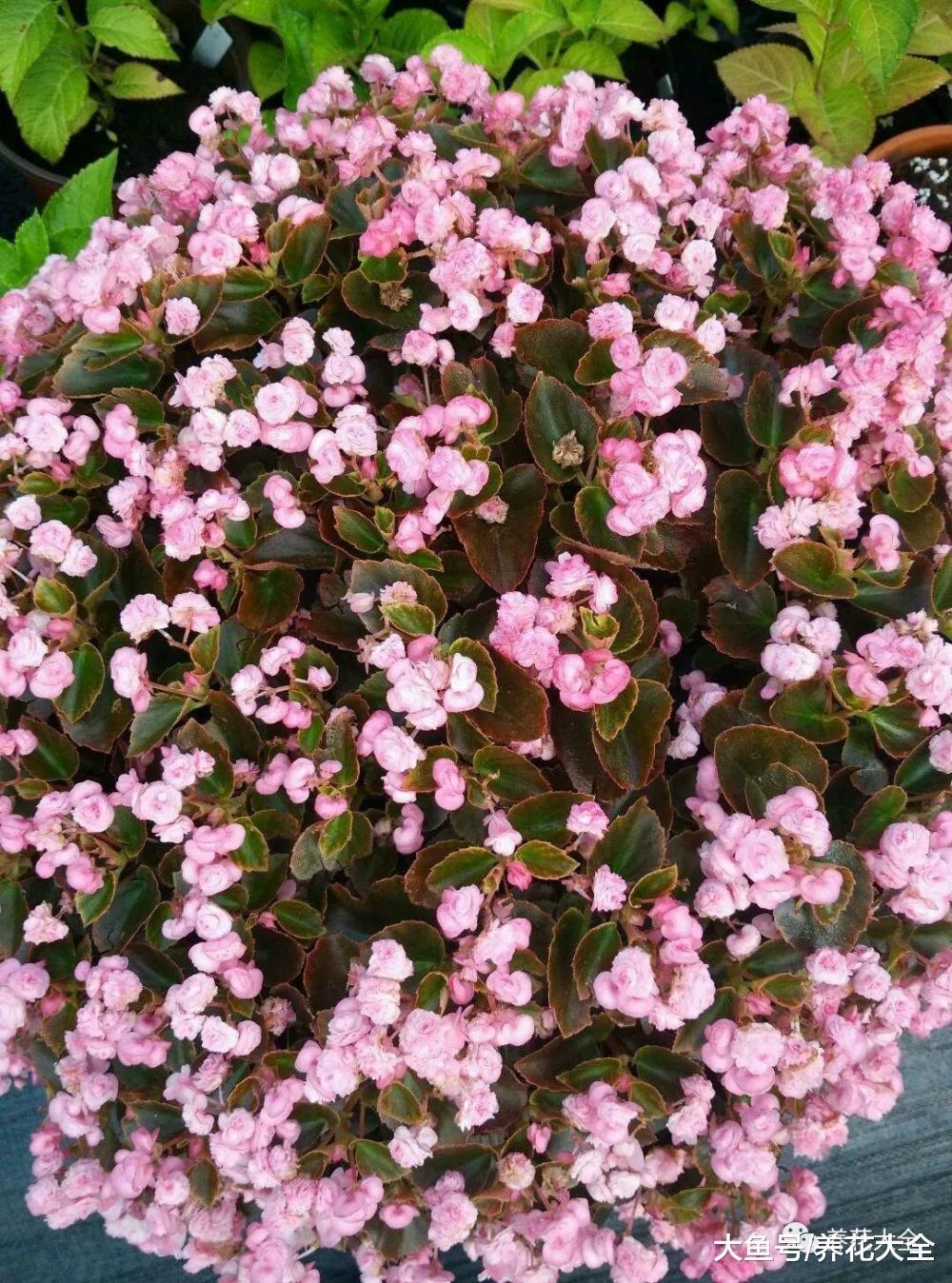 这10种花, 千万别朝叶片喷水, 要不喷1盆死1盆!