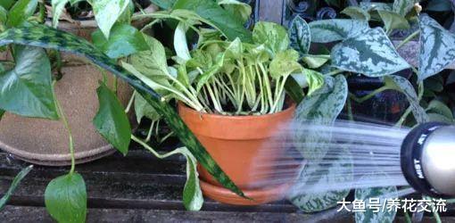 在家里养护的植物出现害虫, 你需要用这些方法处理
