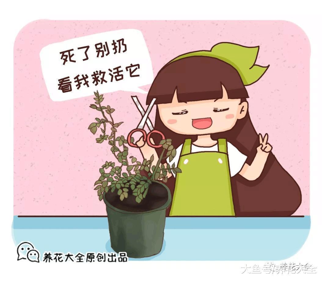 你家的花死透了? 别扔, 1招救活蹭蹭长!