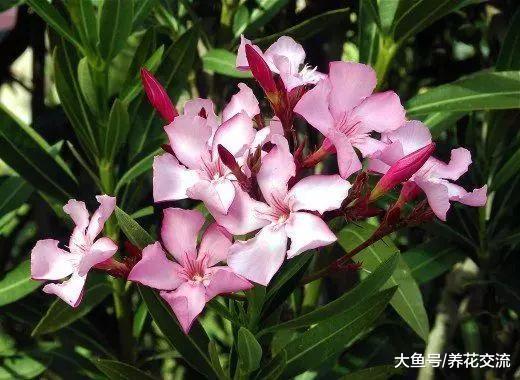 这11种有毒植物一定不要放在家里, 否则会影响