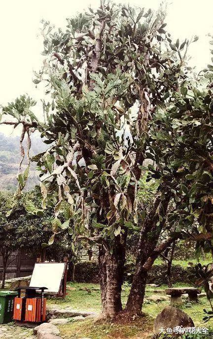 看看这些高龄植物, 仙人掌也可以养这么长时间!