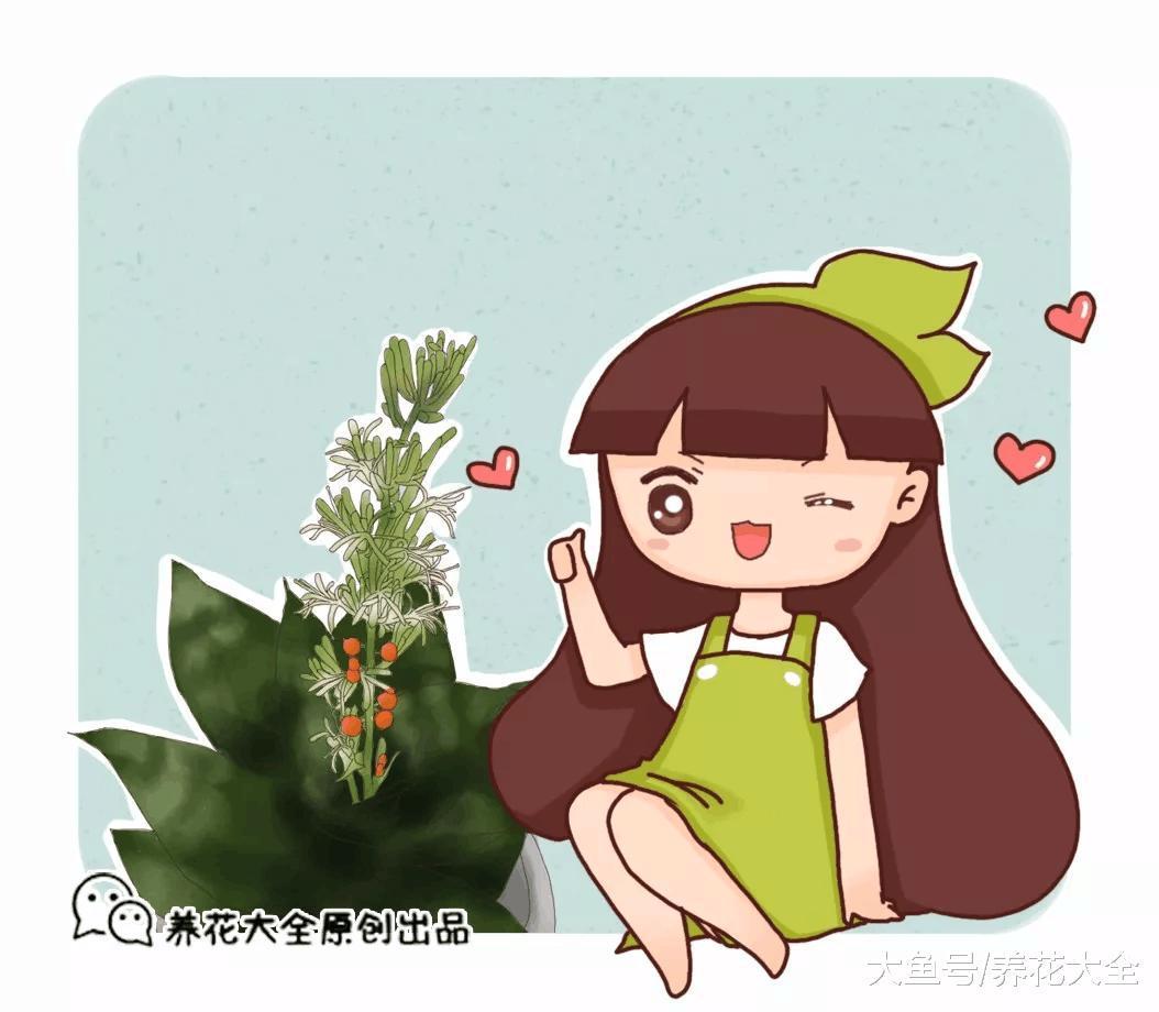 你家的芦荟发财树不开花? 只学1招, 连开5年不