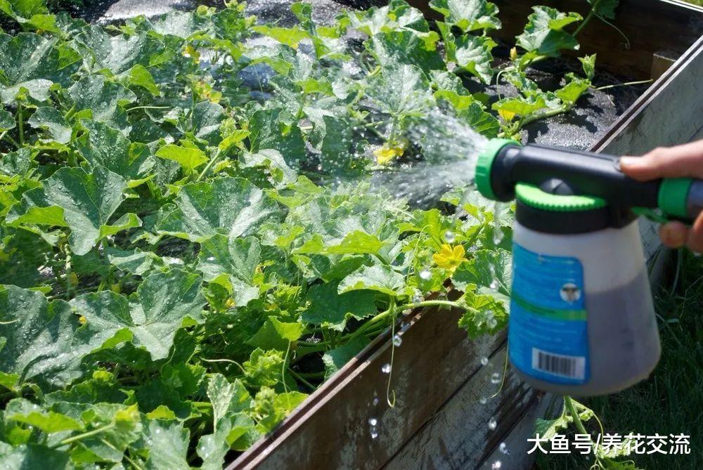 七种常见的有机液肥制作技巧, 养花不买化学肥料都没问题