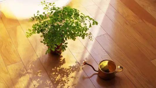 室内养殖植物注意到这些地方, 植物常绿不招虫、不黄叶!