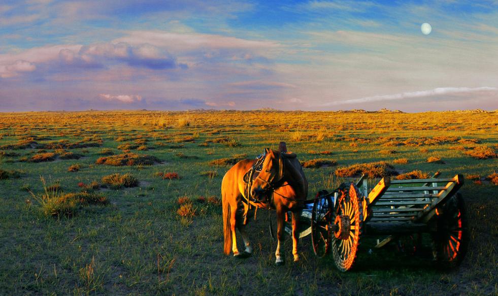内蒙古大沙漠引进黄河水后, 出现这一景观! 驴友: 有一些意外