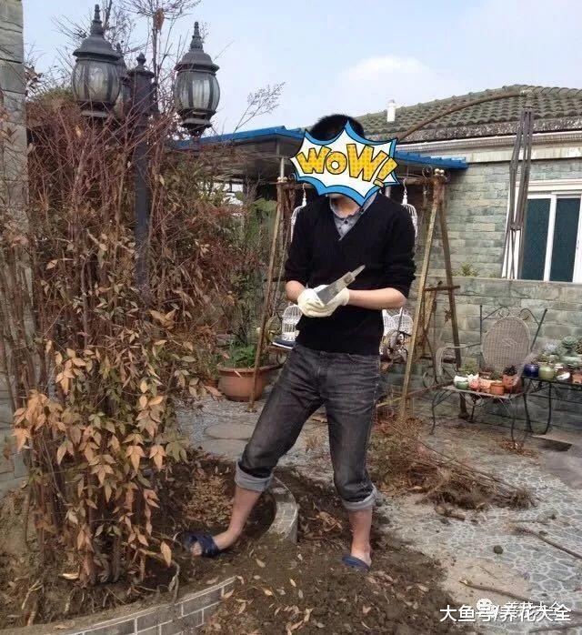 她用多肉, 把家里的花坛变成了森林!