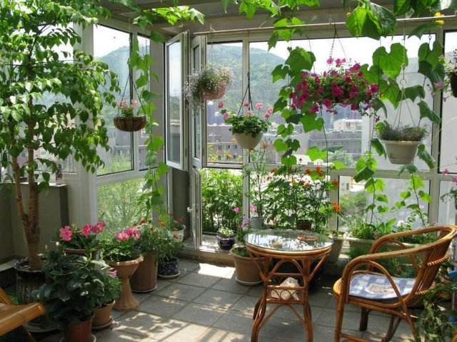 """这种""""五角星""""花, 阳台有多大它就长多大, 1年爬满整个阳台"""
