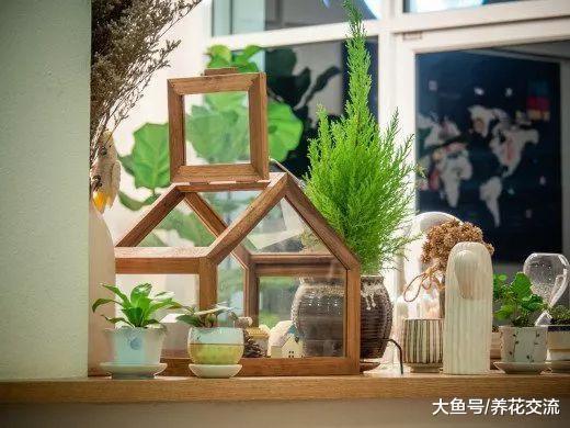 9种特别容易养护的空气净化植物, 作为盆栽养家