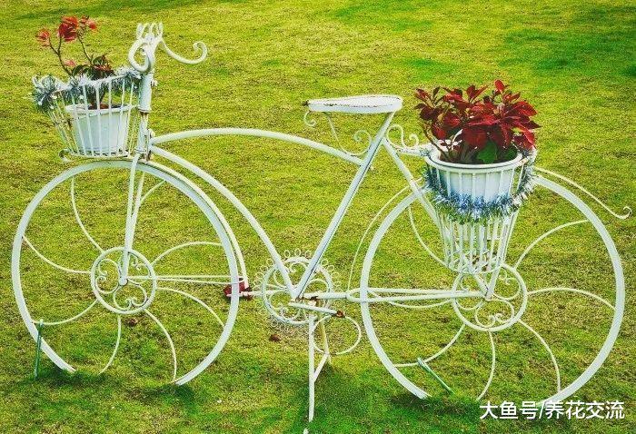 废旧的自行车变成院子里创意的植物景观, 旧物园艺改造计划