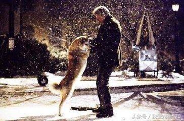 史上最感人的十大宠物(狗狗)电影排行榜