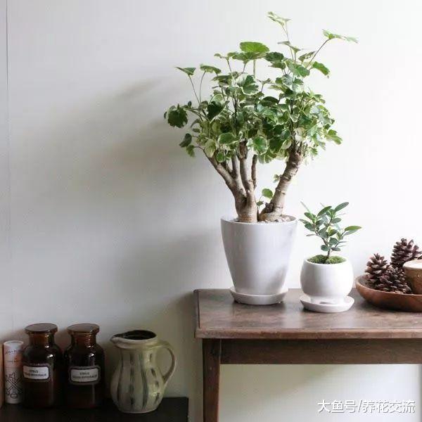 这10种大型盆栽绿植养在客厅, 看起来大气又适合新手养护