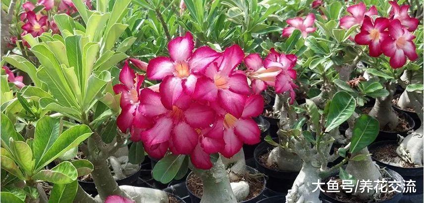 这种奇异的多肉植物特耐旱, 多点光照和少点水才能开花