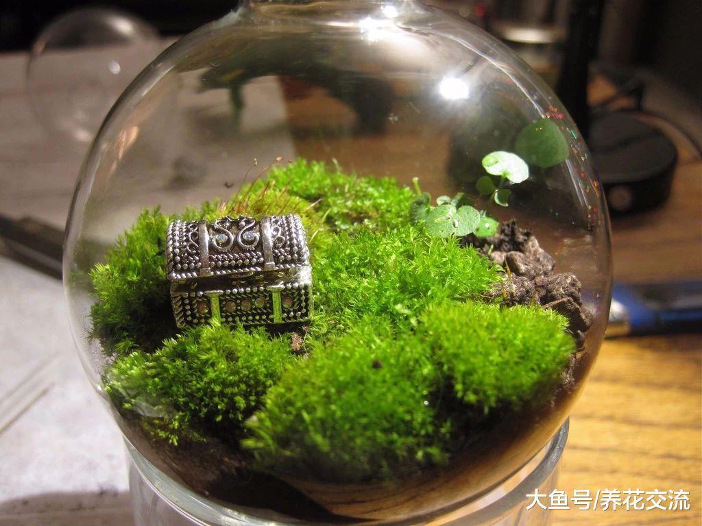 制作苔藓植物景观需要讲究的小技巧, 让苔藓和玻璃瓶完美结合