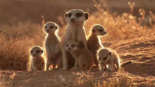 电影盘点: 动物电影十大排行榜——关于动物的梦想