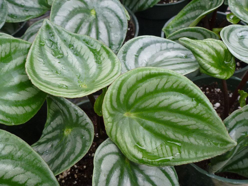 接触到有毒的植物应该如何避免?