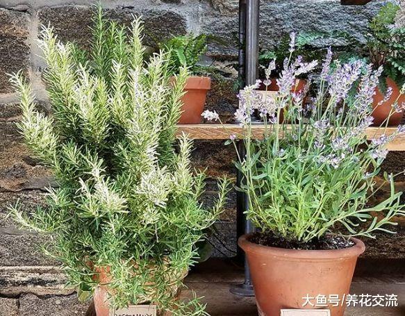 六种特别适合新手照顾的室内植物, 还能去掉家里的奇怪气味