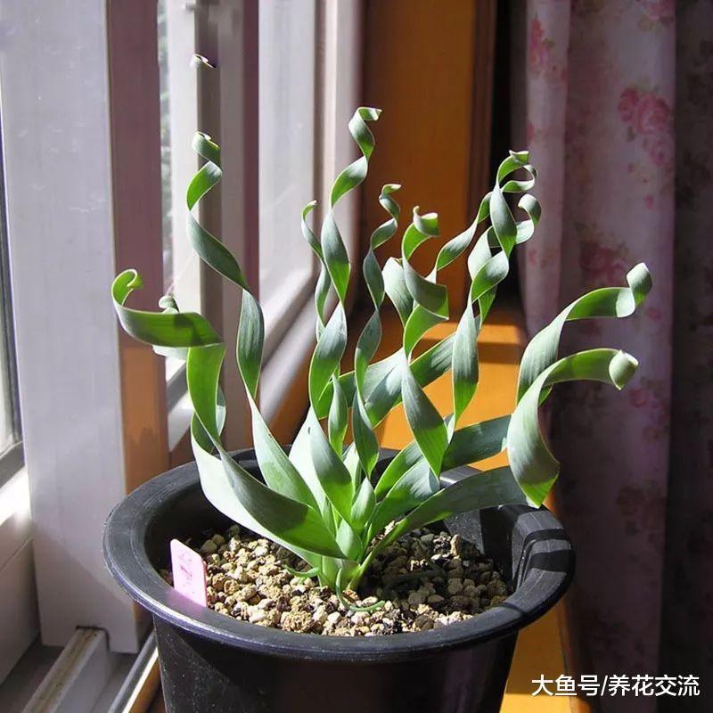 9种长相怪异的多肉植物, 有一大帮花友喜欢它们