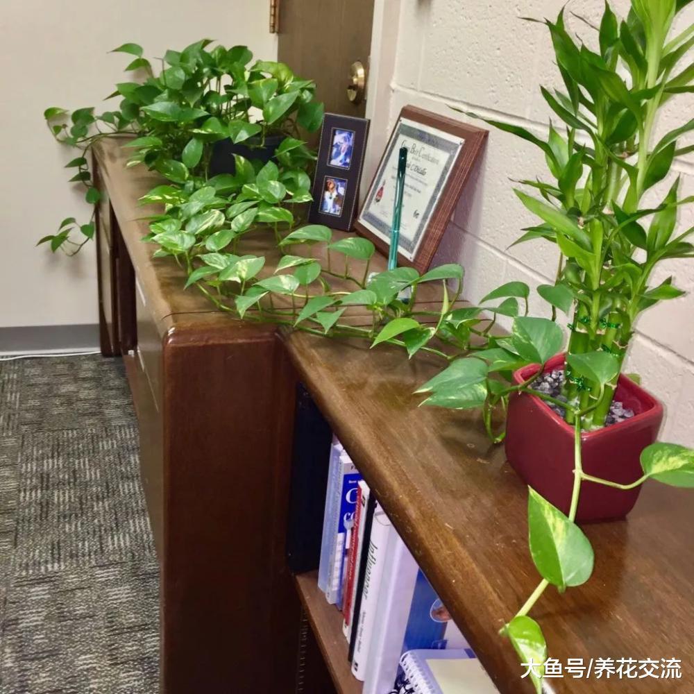 没有窗户的室内环境下, 如何养好盆栽植物呢?