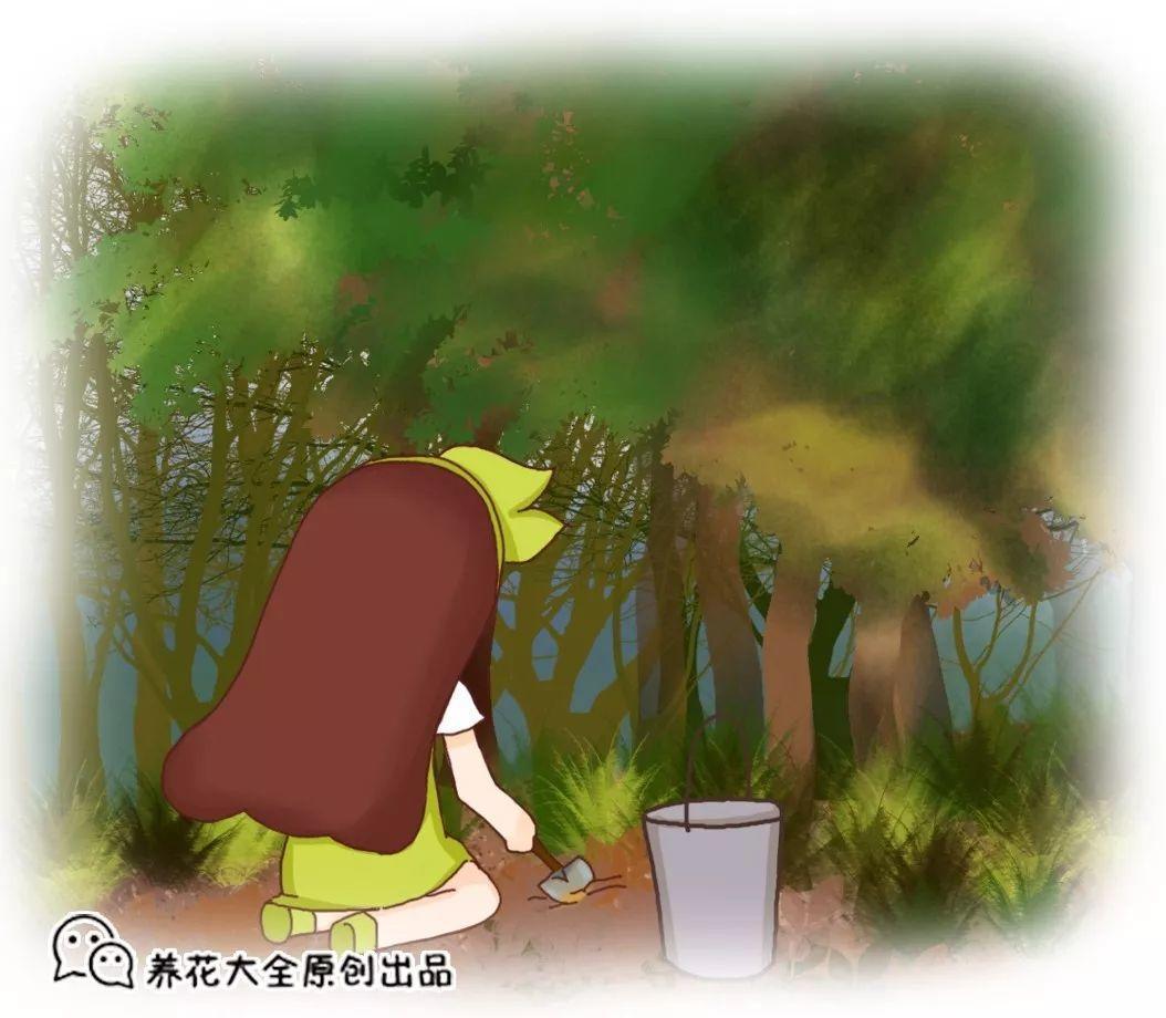 城里人就用这种土, 啥花都能养得好, 简单实用不花钱!