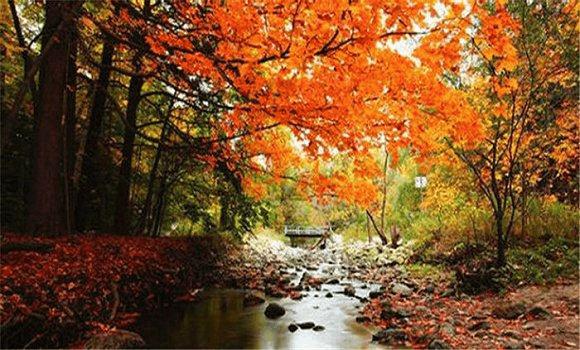 趁着出门赏秋, 捡点树叶回来, 连肥料都省了!