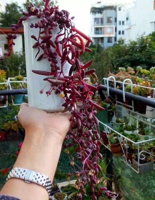 不喜欢传统花卉, 那你可以养殖这种如梦如幻的飘逸植物呀!