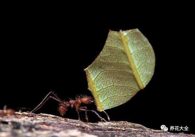 家里的花长不好? 学会这几招, 蚂蚁蜗牛不再有!