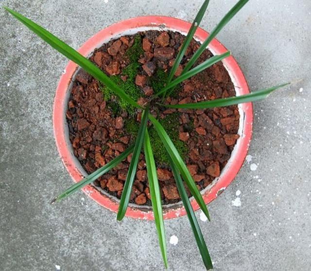 """养花的时候, 3种""""石头""""垫底, 花卉不烂根、长得旺, 捡点就行"""