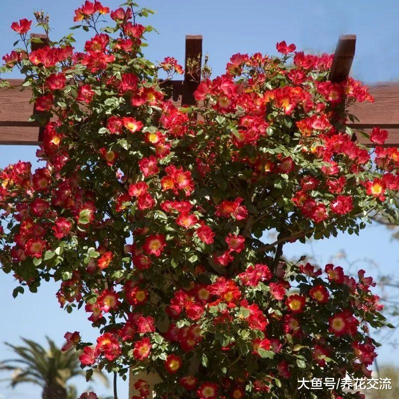 花开灿烂的11种庭院灌木植物, 种在院子里四季