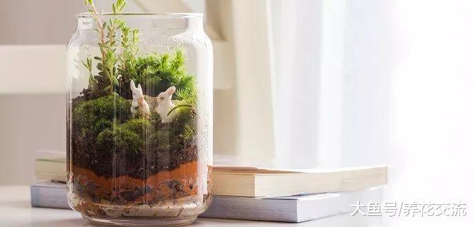 在废弃的玻璃瓶里也能种出一个迷你植物景观