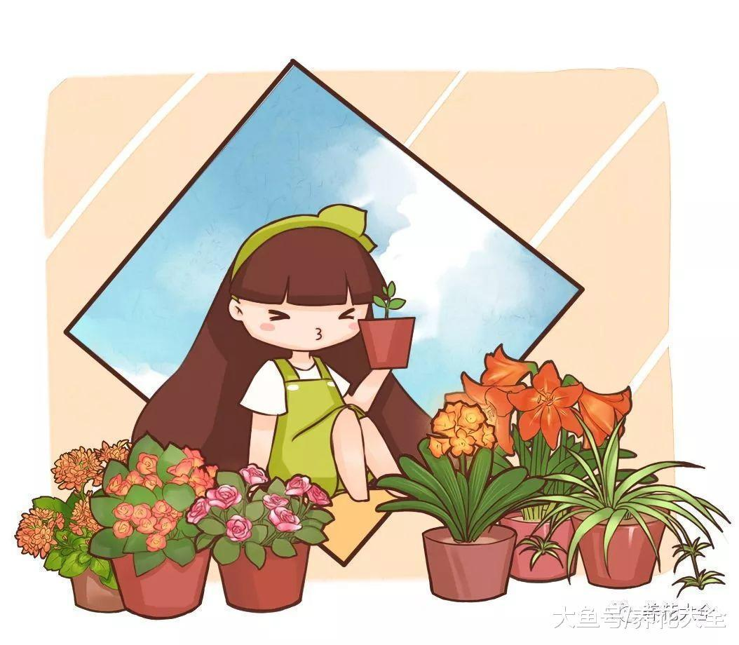 给君子兰加点黄豆, 不仅不黄叶了, 花也越开越多!