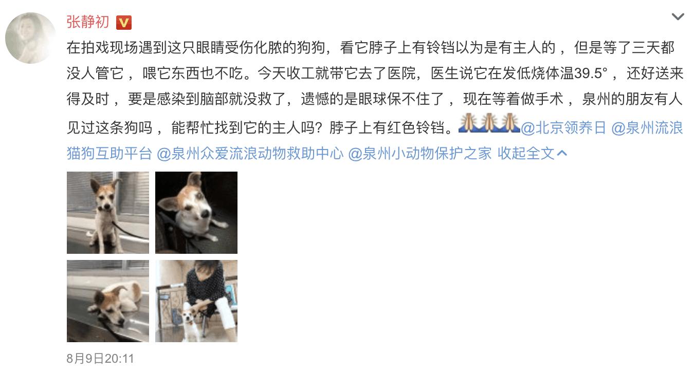 """张静初爱心救助受伤弃养犬 获网友大赞""""人美心善"""""""