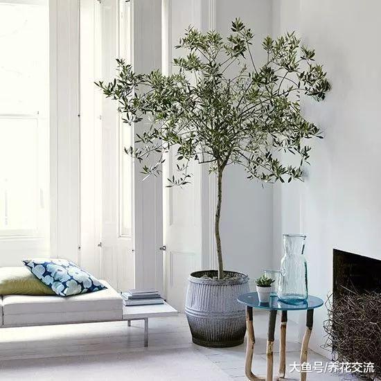 净化空气和观赏性很强的10种室内绿植, 摆放在客厅特适合