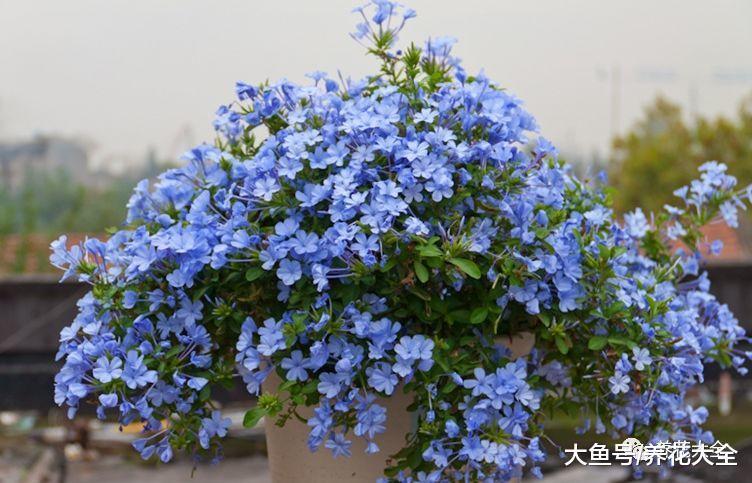 担心花被晒死? 养养这几种, 阳光越好花开的越多!