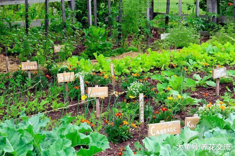 让院子里蔬菜产量更高的7个小贴士, 种菜更加轻松
